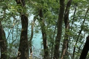 湖は青緑色でした。