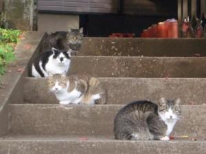 散歩中に猫がこちらをみてました